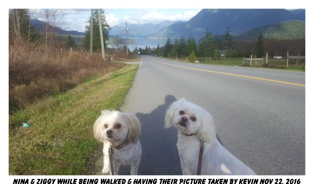 Dog Walking Sechelt